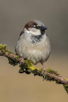 Mooie opname van een huismusvogel op de tak van een boom in het bos