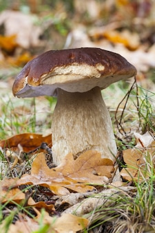 Mooie opname van een paddenstoel in het veld in de herfst