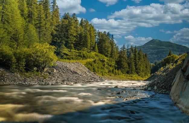 Mooie opname van een rustige rivier omringd door dennenbomen