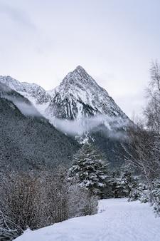 Mooie opname van een wintersparrenbos in de buurt van bergen