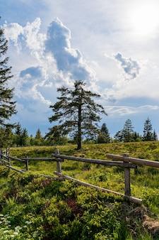 Mooie opname van het zwarte woud, duitsland