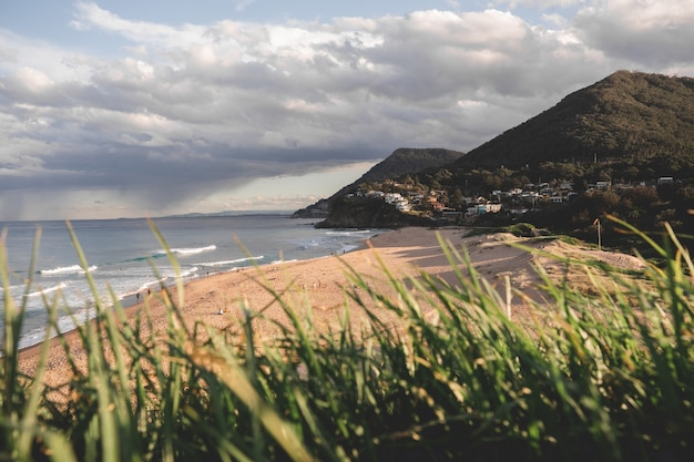 Mooie opname van wazige planten met een strand op de achtergrond