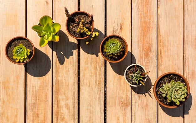 Mooie opstelling van planten in potten