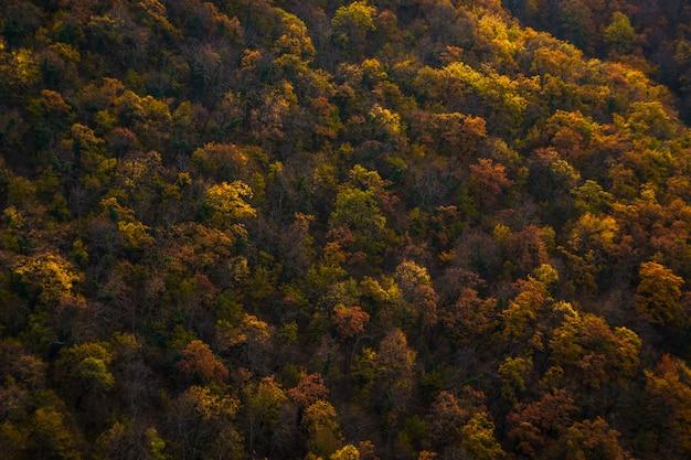Mooie oranje herfst bos. herfstbos, veel bomen in de oranje heuvels, oranje eik.