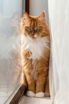 Mooie oranje kat dichtbij venster