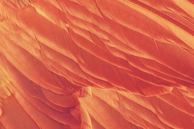 Mooie oranje-rode kleuren toon veer textuur achtergrond, trends kleur