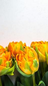 Mooie oranje tulpen op een witte achtergrond, perfect voor achtergrondwenskaart verticaal