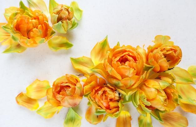 Mooie oranje tulpen op een witte achtergrond, perfect voor achtergrondwenskaart