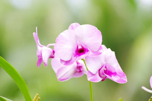 Mooie orchidee op groen