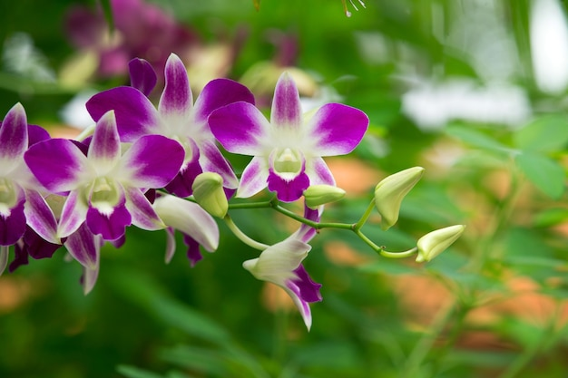 Mooie orchidee op groene achtergrond