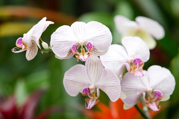 Mooie orchidee op groene ondergrond Premium Foto