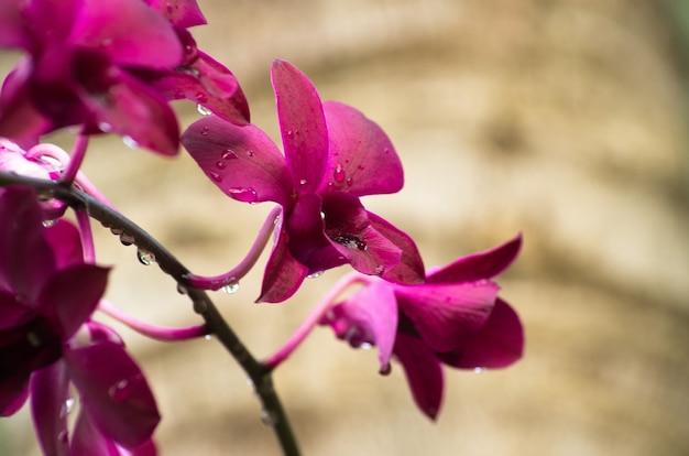 Mooie orchidee op groene ondergrond
