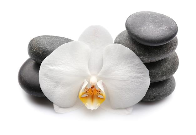 Mooie orchideebloem met stenen op wit