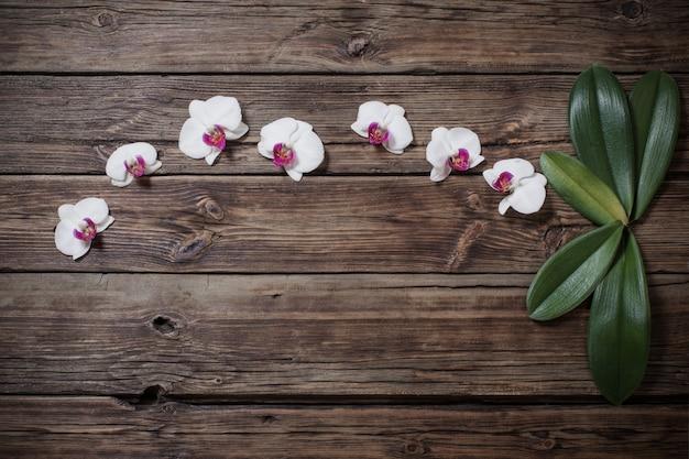Mooie orchideeën op oude houten achtergrond