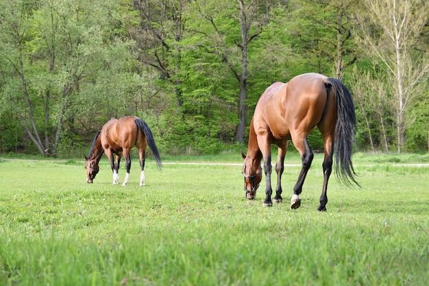 Mooie paarden grazen vrij in de natuur.