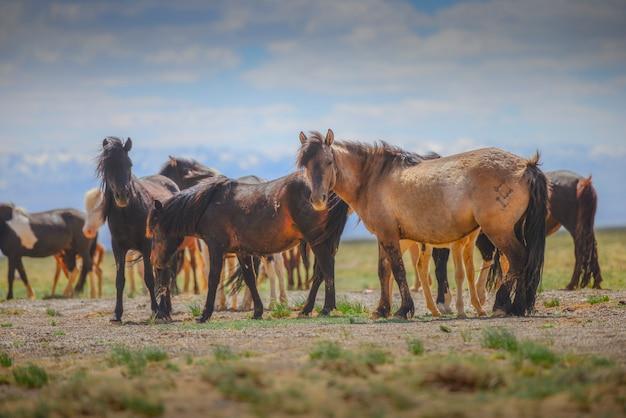 Mooie paarden in het veld op blauwe hemel