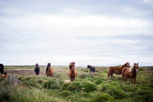 Mooie paarden in het wild