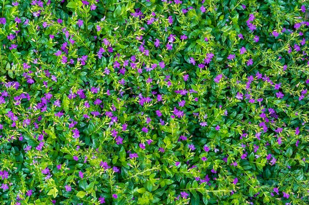Mooie paarse bloemen en groene bladeren