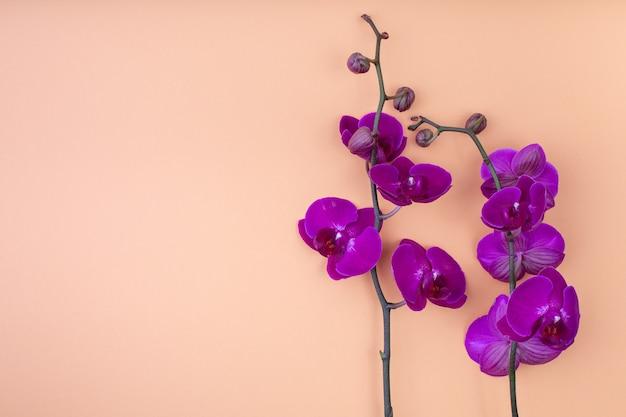 Mooie paarse orchideebloemen op het beige oppervlak, met copyspace voor tekst, bovenaanzicht, plat leggen