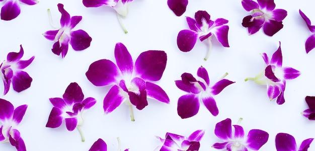 Mooie paarse orchideebloemen op witte ondergrond