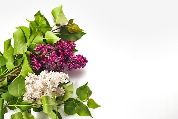 Mooie paarse sering op houten witte achtergrond