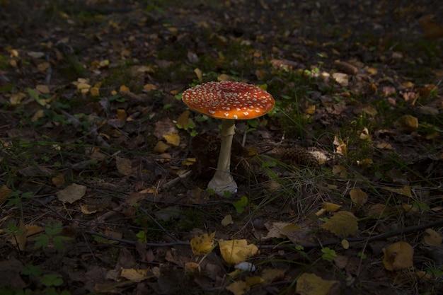 Mooie paddenstoel omgeven door bladeren in het midden van de jungle