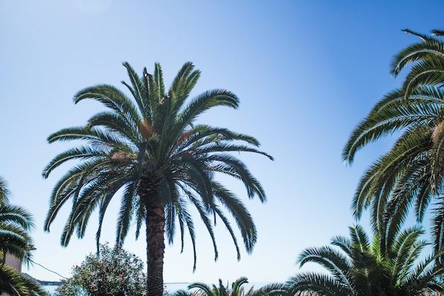 Mooie palm op blauwe hemelachtergrond