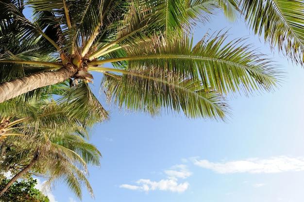 Mooie palmbomen op strand oceaan