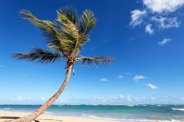 Mooie palmboom in caraïbisch strand in de zomer