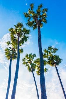 Mooie palmboom op blauwe hemel