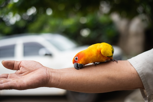 Mooie papegaaivogel op iemands hand