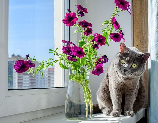 Mooie petunia bloemen en een schattige grijze kat op de vensterbank. zomerstemming.