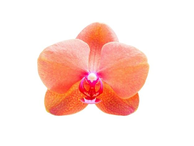 Mooie phalaenopsis orchideebloem geïsoleerd op een witte achtergrond