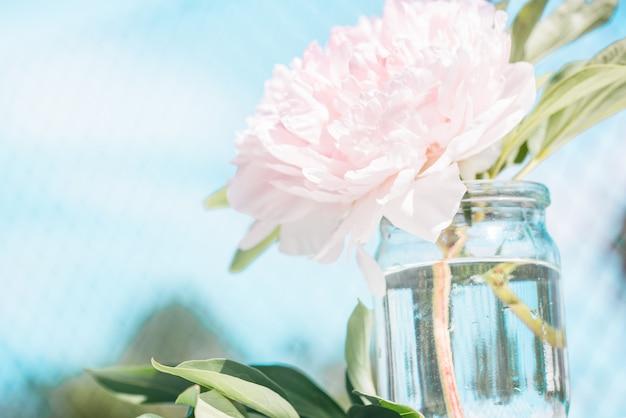 Mooie pioenbloemen in zonblure, romantische bloemenachtergrond in uitstekende stijl