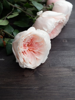 Mooie pioenvormige delicate roze rozen in artistieke vervaging.