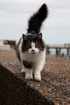 Mooie pluizige kat die op een zomerdag op straat loopt, de kat loopt langs de kade van de rozijnen...