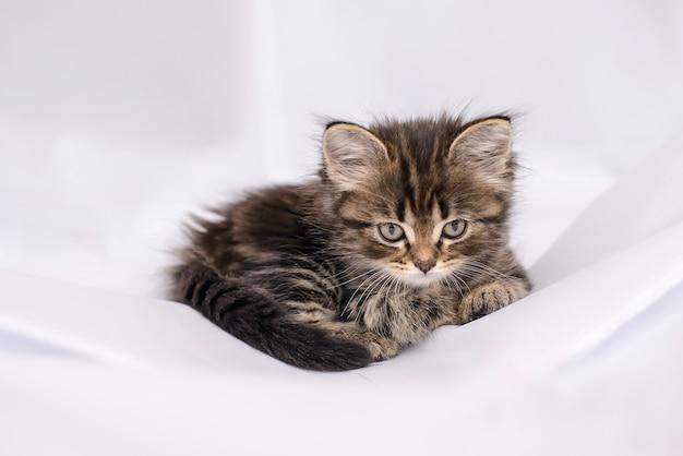 Mooie pluizige, schattige kleine kitten liggend op witte doek