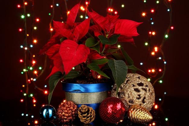 Mooie poinsettia met kerstballen op de achtergrond van kerstverlichting
