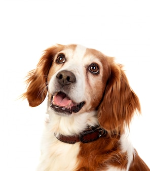 Mooie portretten van een hond