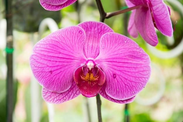Mooie purpere orchideeënbloem in tuin