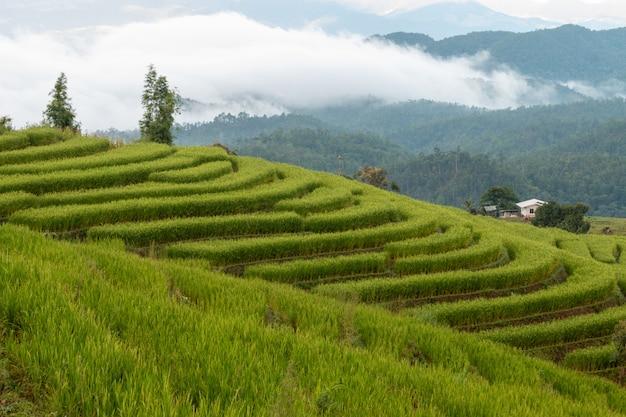 Mooie rijstterrassen in de ochtend in chiang mai, thailand