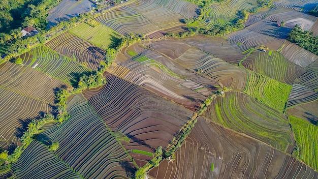 Mooie rijstterrassen in ochtendlicht dichtbij tegallalang-dorp, ubud, bali, indonesië.