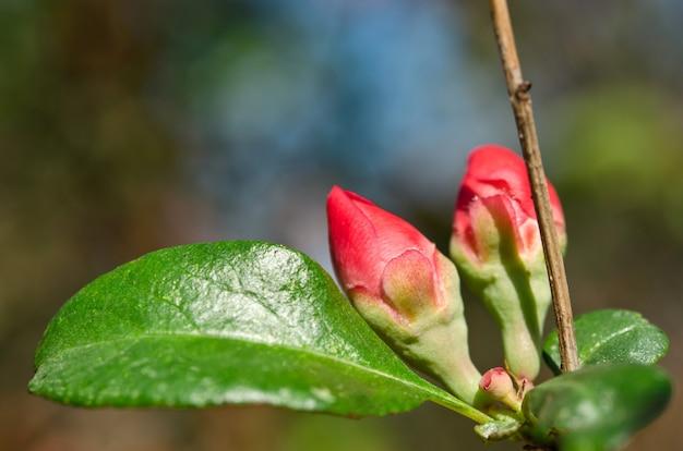Mooie rode bloem