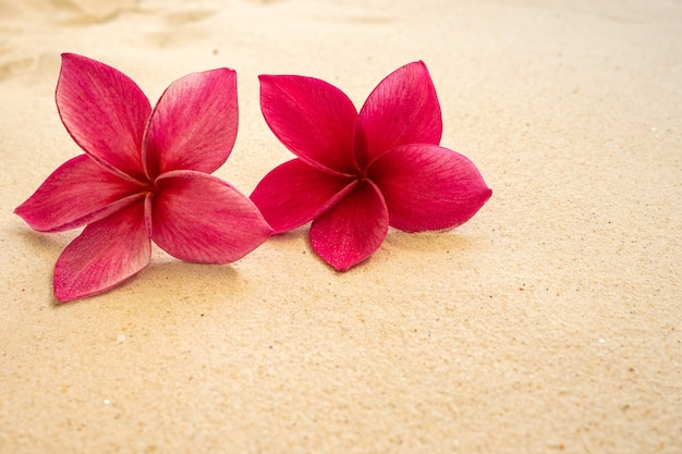 Mooie rode frangipani op het strand