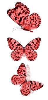 Mooie rode tropische vlinders geïsoleerd op een witte achtergrond. motten voor ontwerp