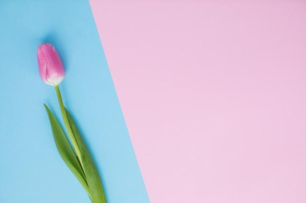 Mooie rode tulpen op veelkleurige papieren achtergronden met kopie ruimte. lente, zomer, bloemen, kleurenconcept, vrouwendag