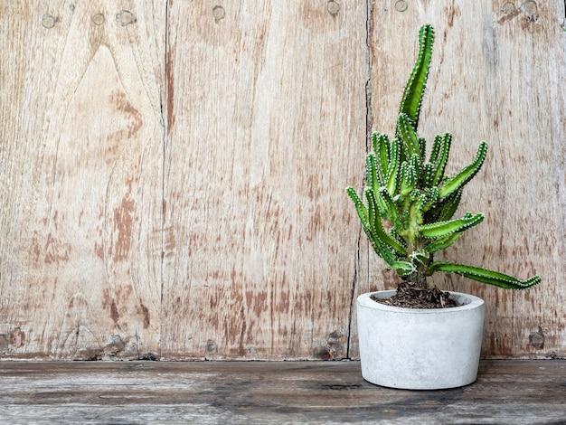 Mooie ronde betonnen plantenbak met groene cactusplant
