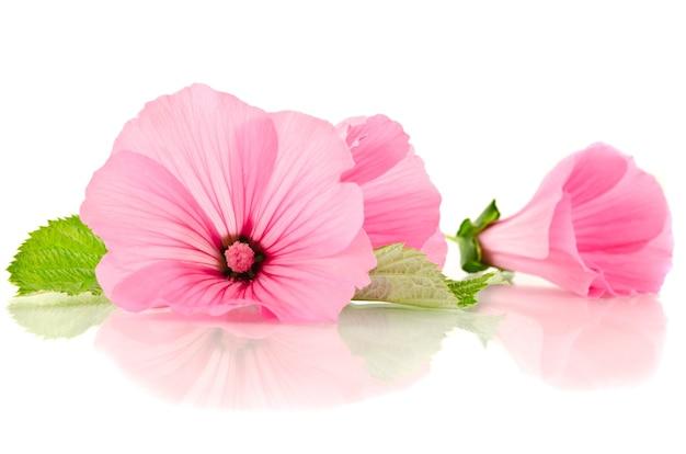 Mooie roze bloem