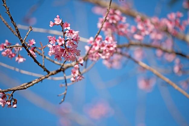 Mooie roze bloemachtergrond