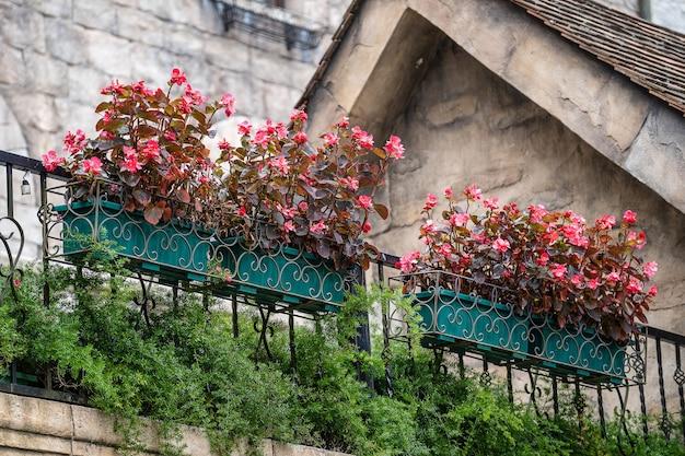 Mooie roze bloemen in bloempotten in een tropische tuin in de stad danang, vietnam, close-up